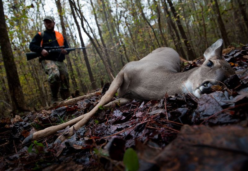 Hunting Deer : On the Wooded banks of The Chattahoochee River : Georgia