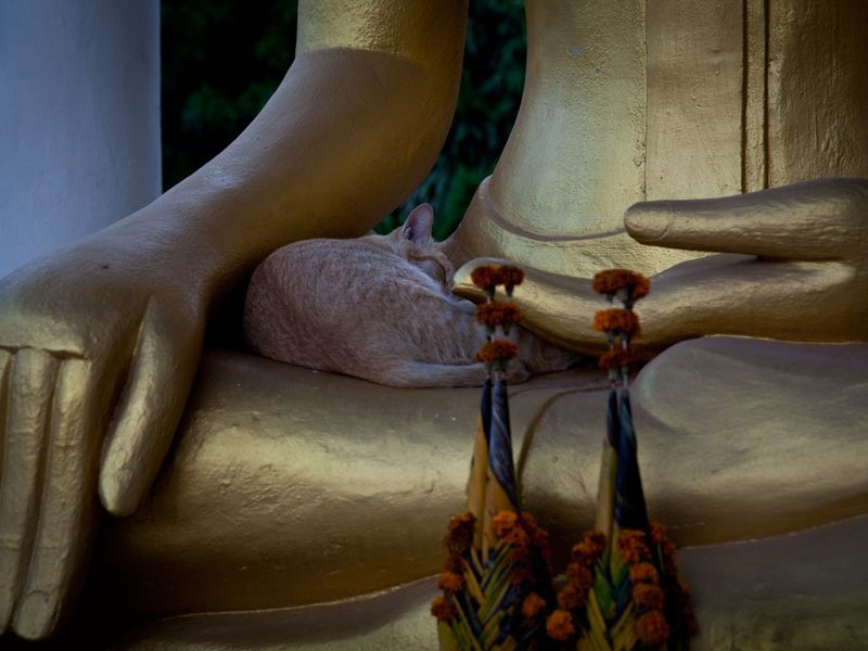 Sleeping cat in the arms of Buddha – Vientiane, Laos