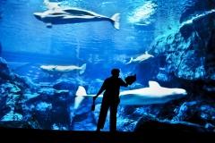 Acuity Brands Annual ReportGeorgia Aquarium Atlanta Acuity Lighting and Zep BrandsJez Coulsoncell (+1) 917 309 5439jez@iv-photo.comwww.jezblog.comwww.jezcoulson.comInsight-VisualNew York (+1) 212 459 3399Atlanta (+1) 404 732 4647Washington DC (+1) 202 558 6518London +44 (0) 20 7 993 8480www.iv-photo.com