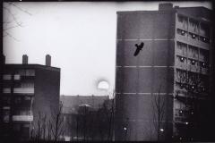 p49---bird
