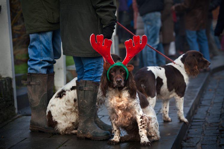 Reindeer Dog : Ludlow : UK